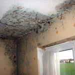 Quando la muffa attacca le pareti della tua casa in affitto