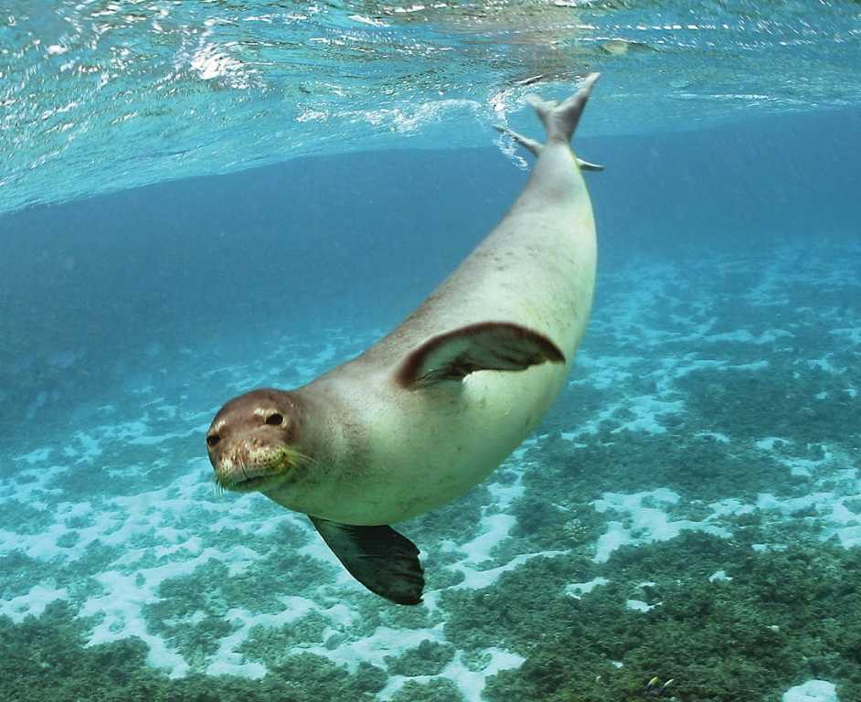 foca-monaca-nelle-coste-sarde