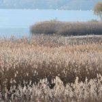 La Riserva naturale di Dormelletto: un tour nella natura incontaminata