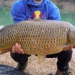 Le stagioni della pesca alla carpa
