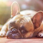 Ghiandole perianali cane rimedi naturali